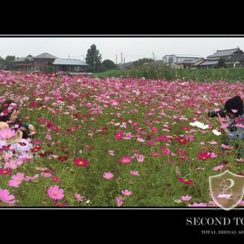 【前撮り熊本店】コスモス畑!!