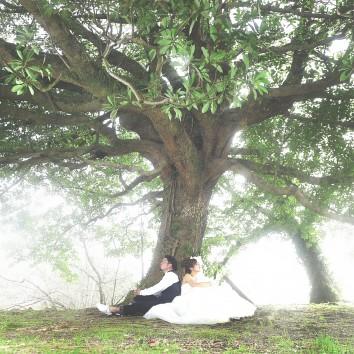 【福岡店 前撮り】大きな木の下で